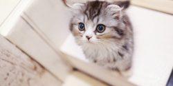誰も教えてくれない猫の保険の失敗しない選び方