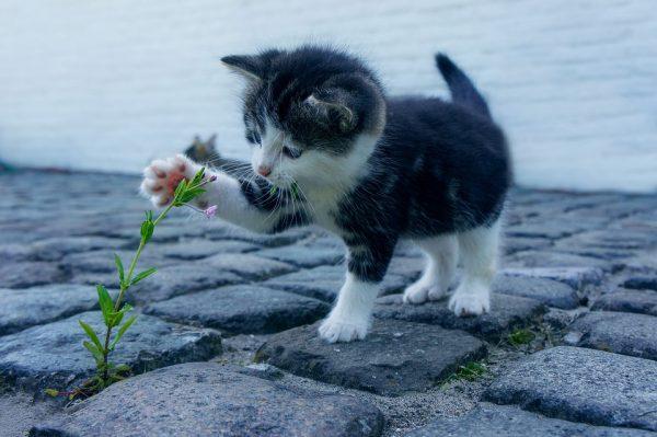 花で遊ぶ猫