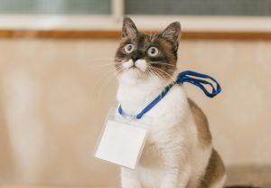 きをつけ猫