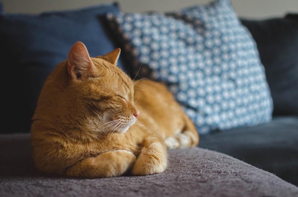 ソファーで猫