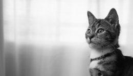 猫が咳をしている原因は何か?病気なのか見分けるポイントは?