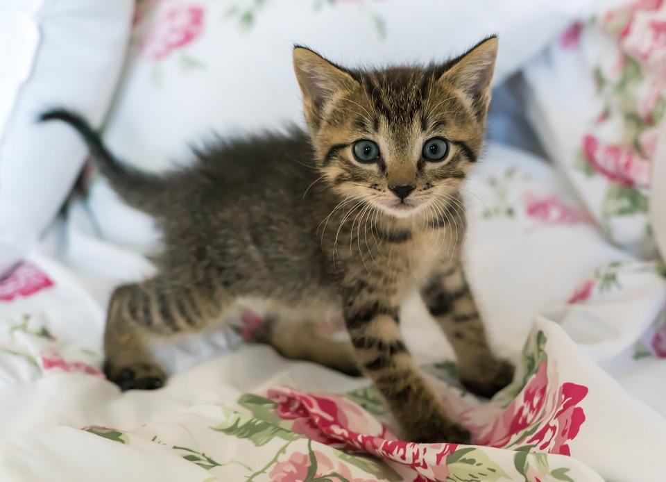 カメラ目線子猫