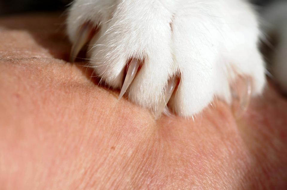 爪のアップ
