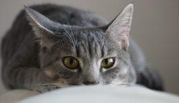 猫の保険のデメリットから逆に良い保険を探しだす4つのポイント