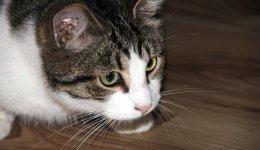 猫がご飯を食べない原因とは?食べる様になる原因別対処法