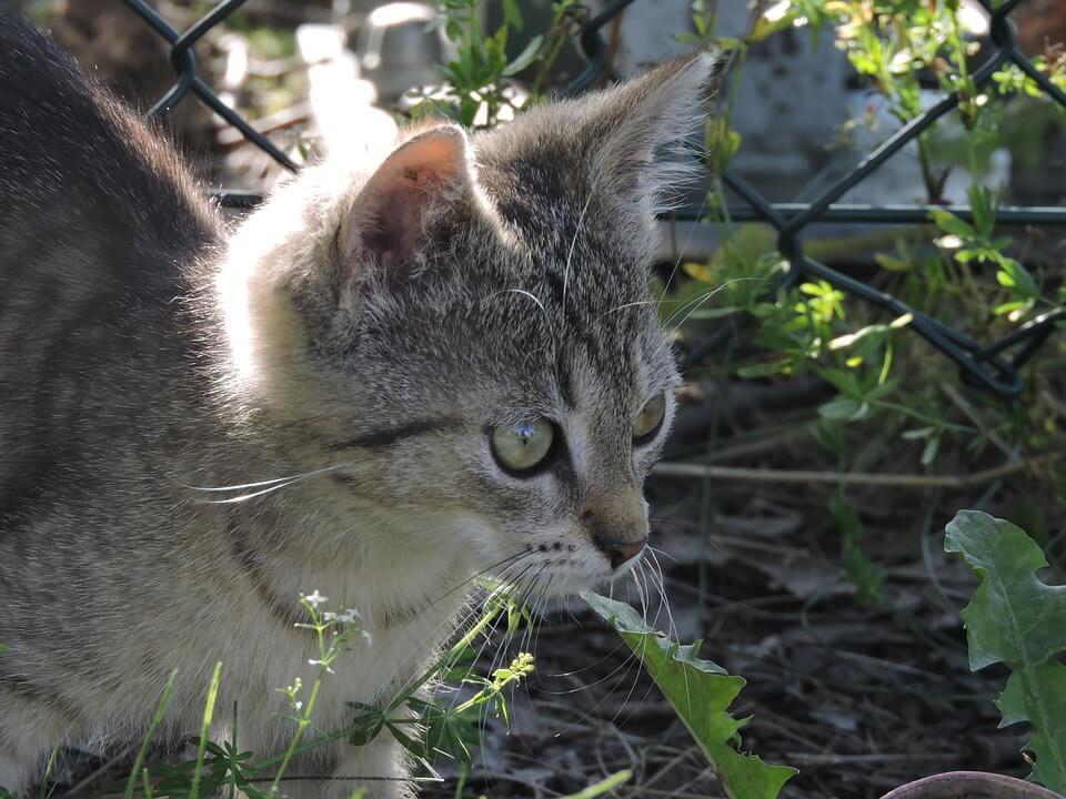草むらの猫