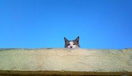 猫エイズの症状などを正しく理解して偏見をなくしたい!