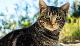 猫砂を素材別に比較してみると実は危険な物も?【おすすめはコレ】