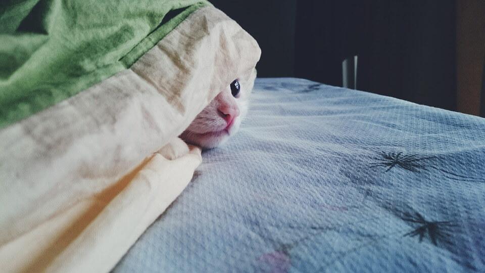 ひょっこり猫