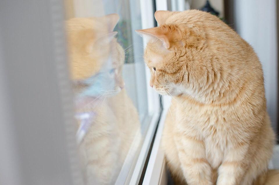 外を眺める