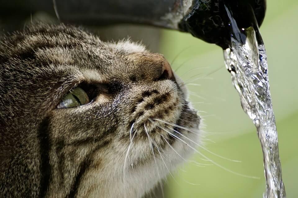 飲みたい猫