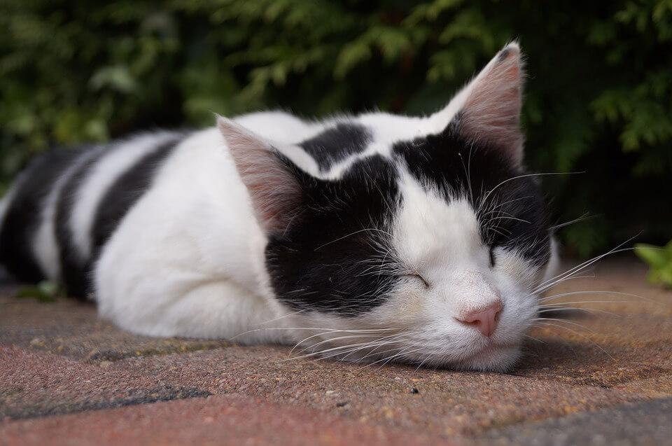 スヤスヤ猫
